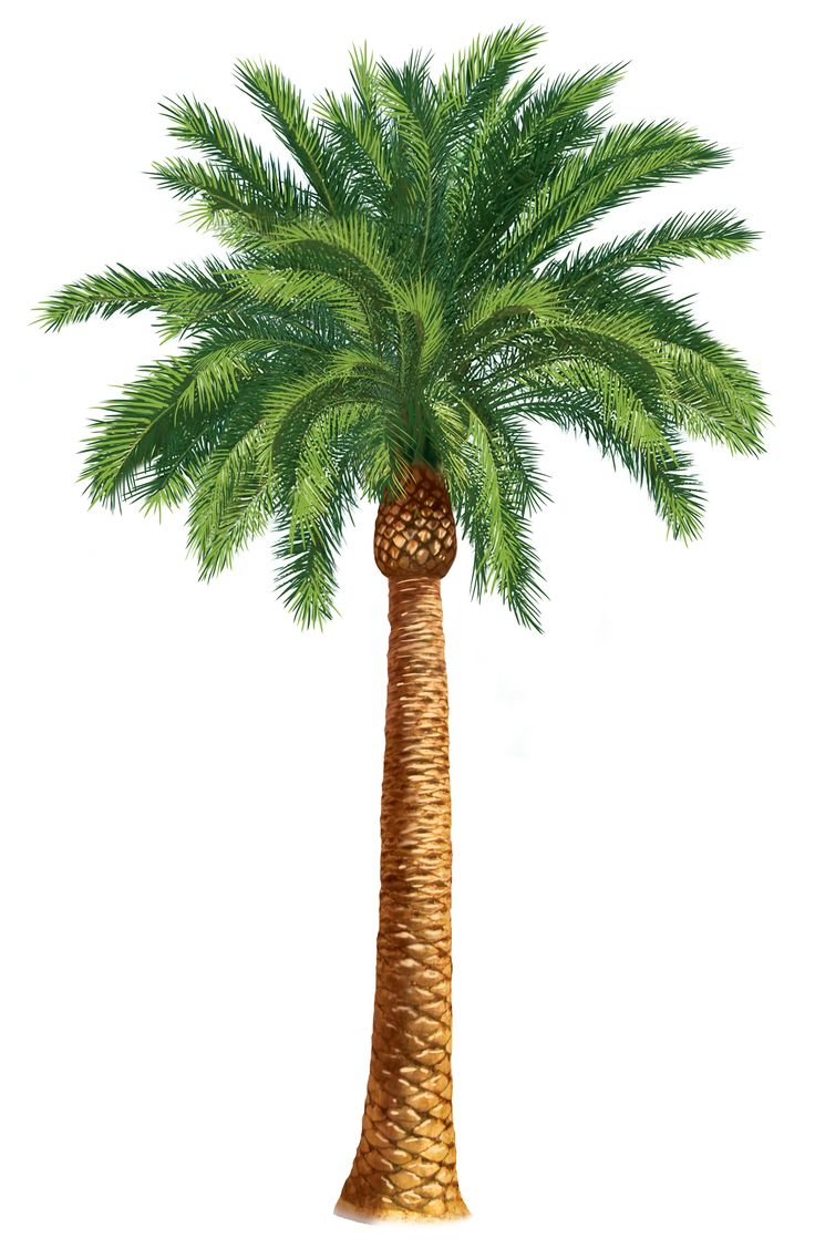 0 ideas about palm tree clip art on 3