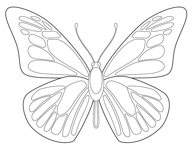 Butterfly outline 7