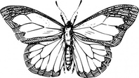 Butterfly outline clip art download 1 clip arts page