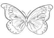 Butterfly outline pattern 2