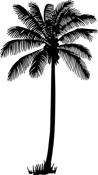 Palm tree palm silhouette clipart