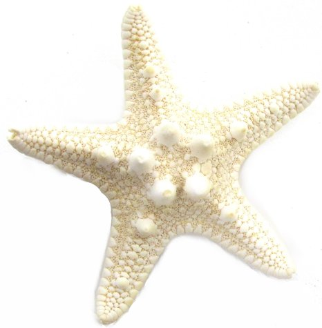 Cute starfish clipart free images 3 3