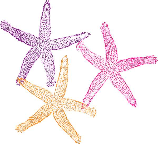 Cute starfish clipart free images 3 4