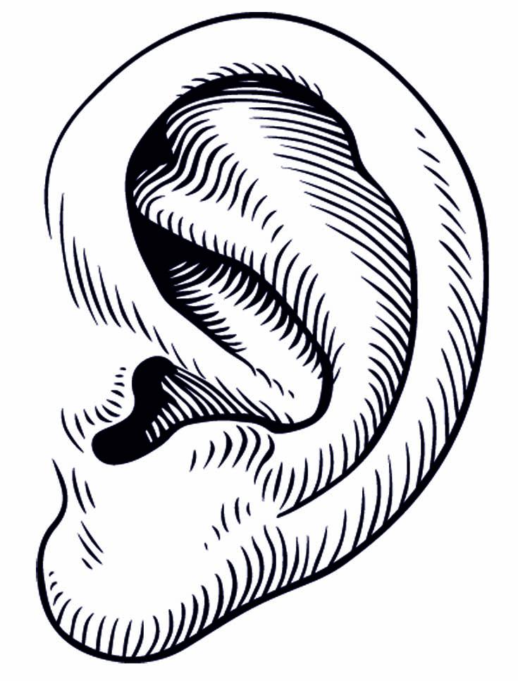 Ear clipart 8 2