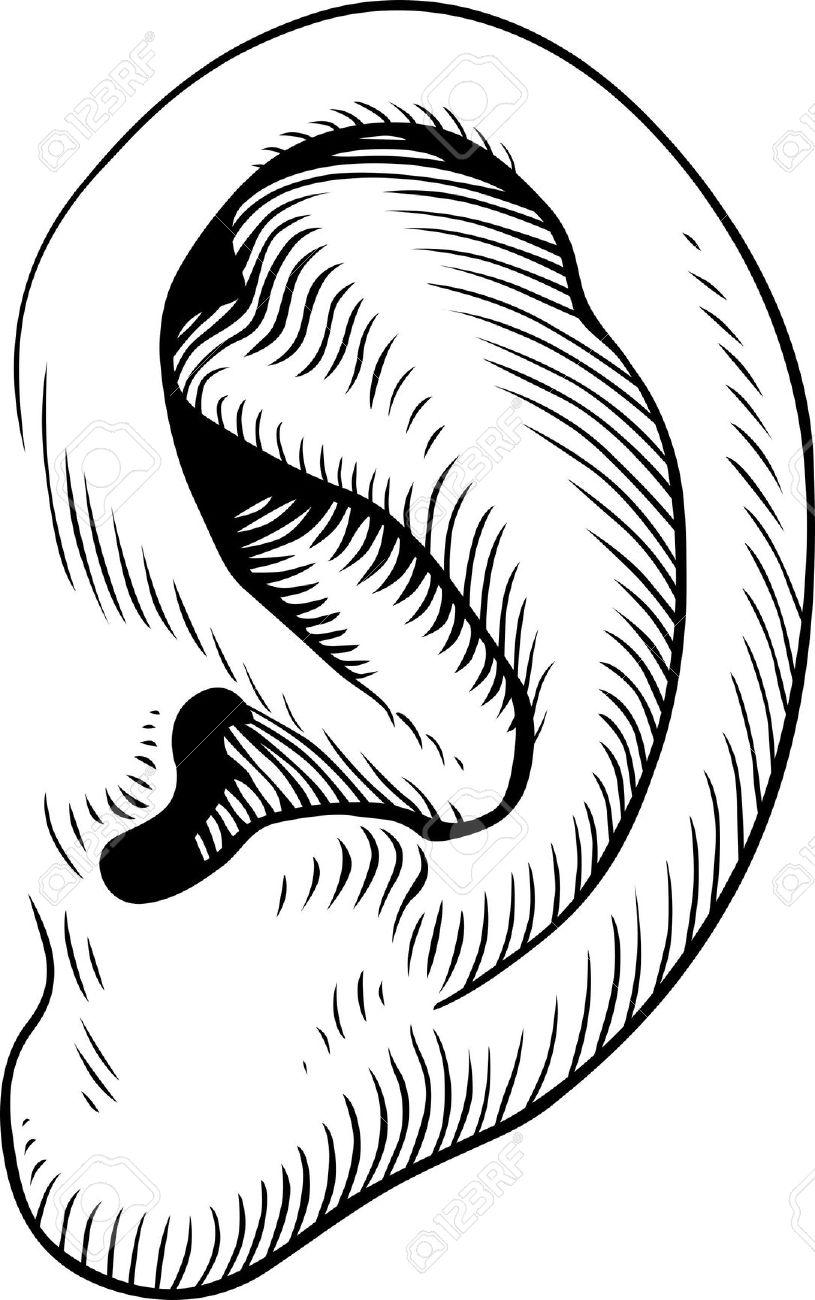 Ear clipart earclipart images listening clip art photo 3