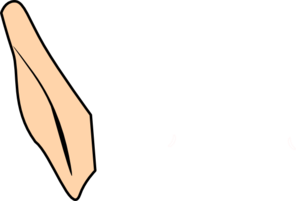 Picture of ear clipart image
