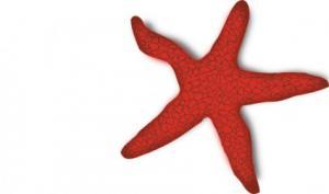 Starfish clip art download 2
