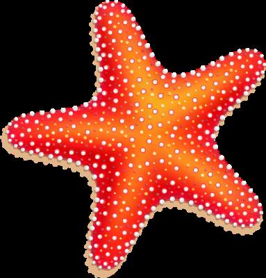 Starfish clipart 2