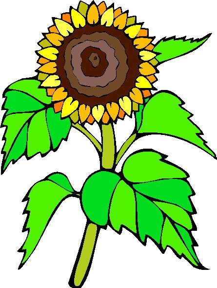 Sunflower clip art free clipart images 2 clipartbold 3