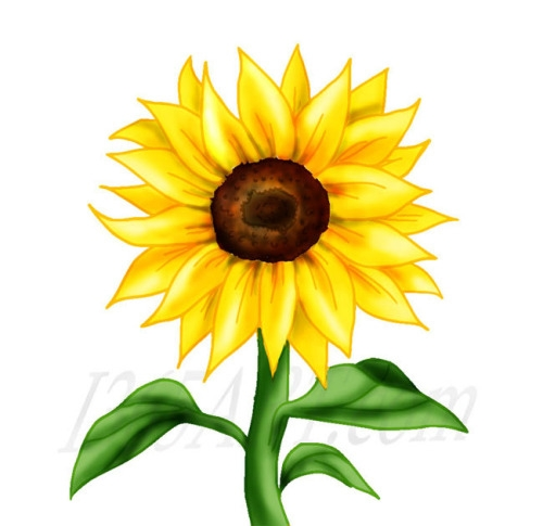 Sunflower clipart images 4