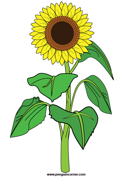 Sunflower clipart images