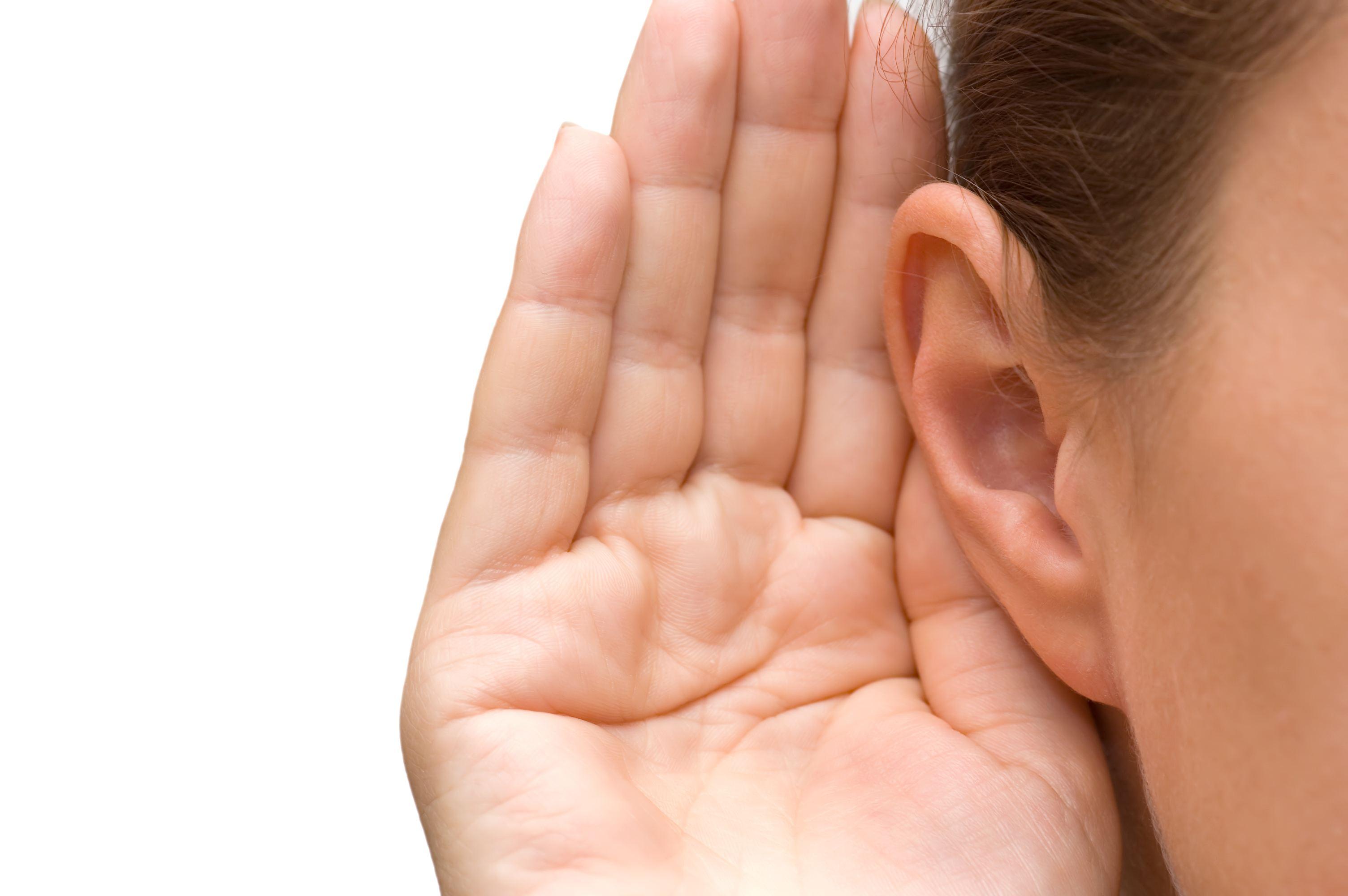 Two ears clip art clipart 2