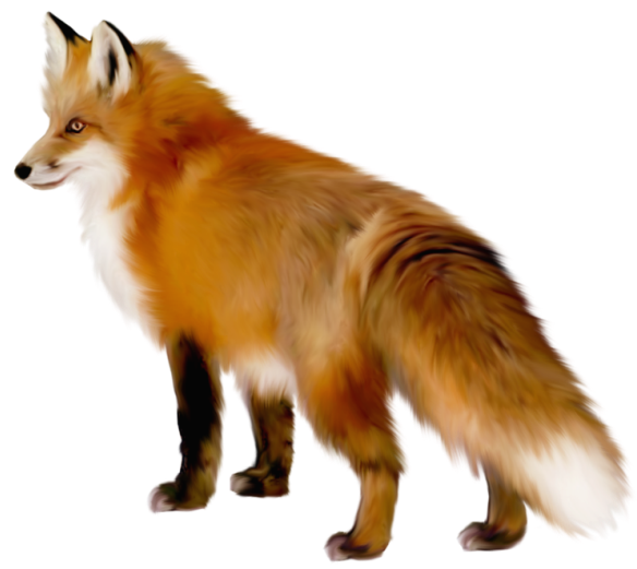 Cute fox clipart free images 4