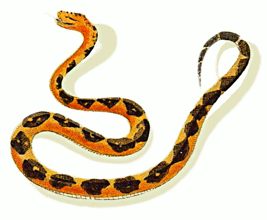 Free bushmaster snake clipart 1 page of clip art
