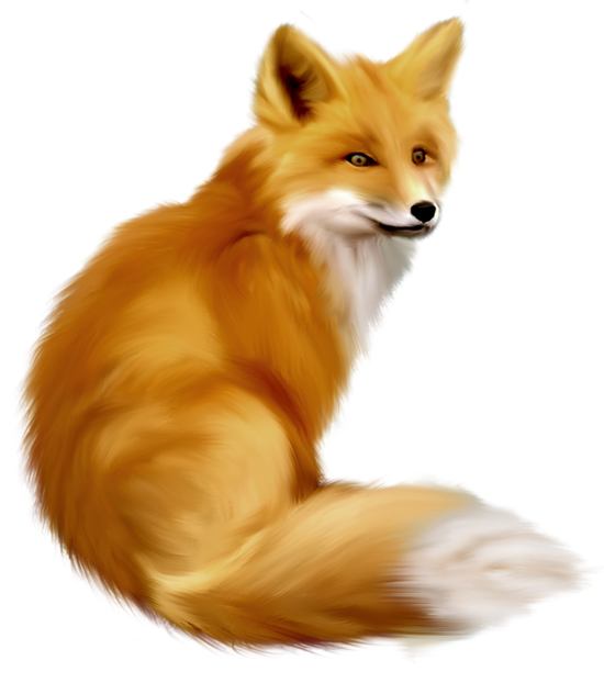 Free fox clipart pictures 7