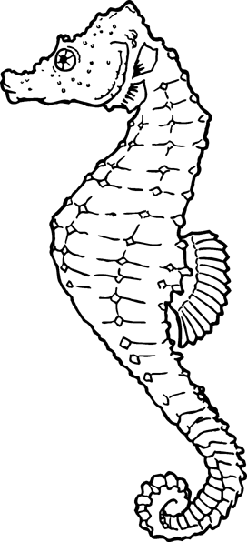 Free seahorse clipart 1 page of clip art