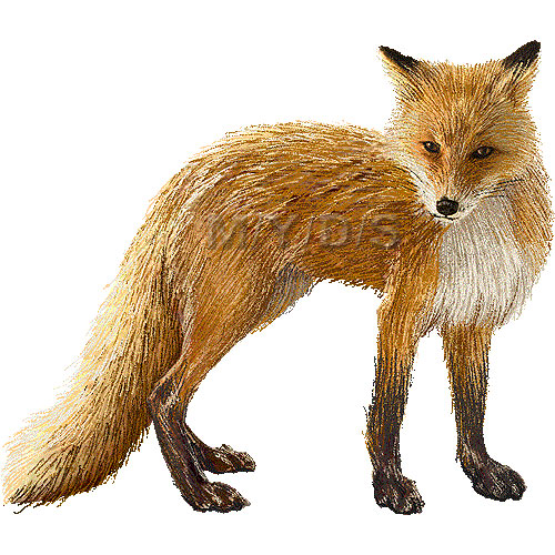 Red fox clipart 2