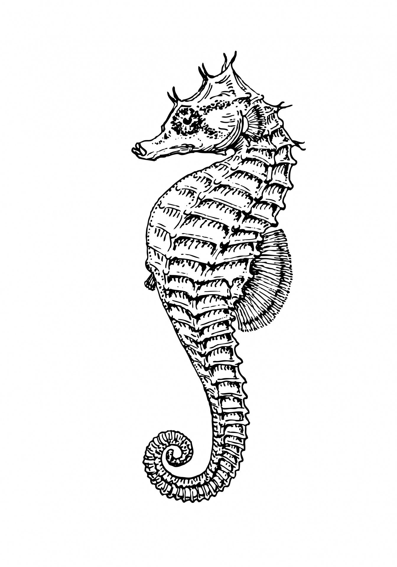 Seahorse clipart illustration free 2