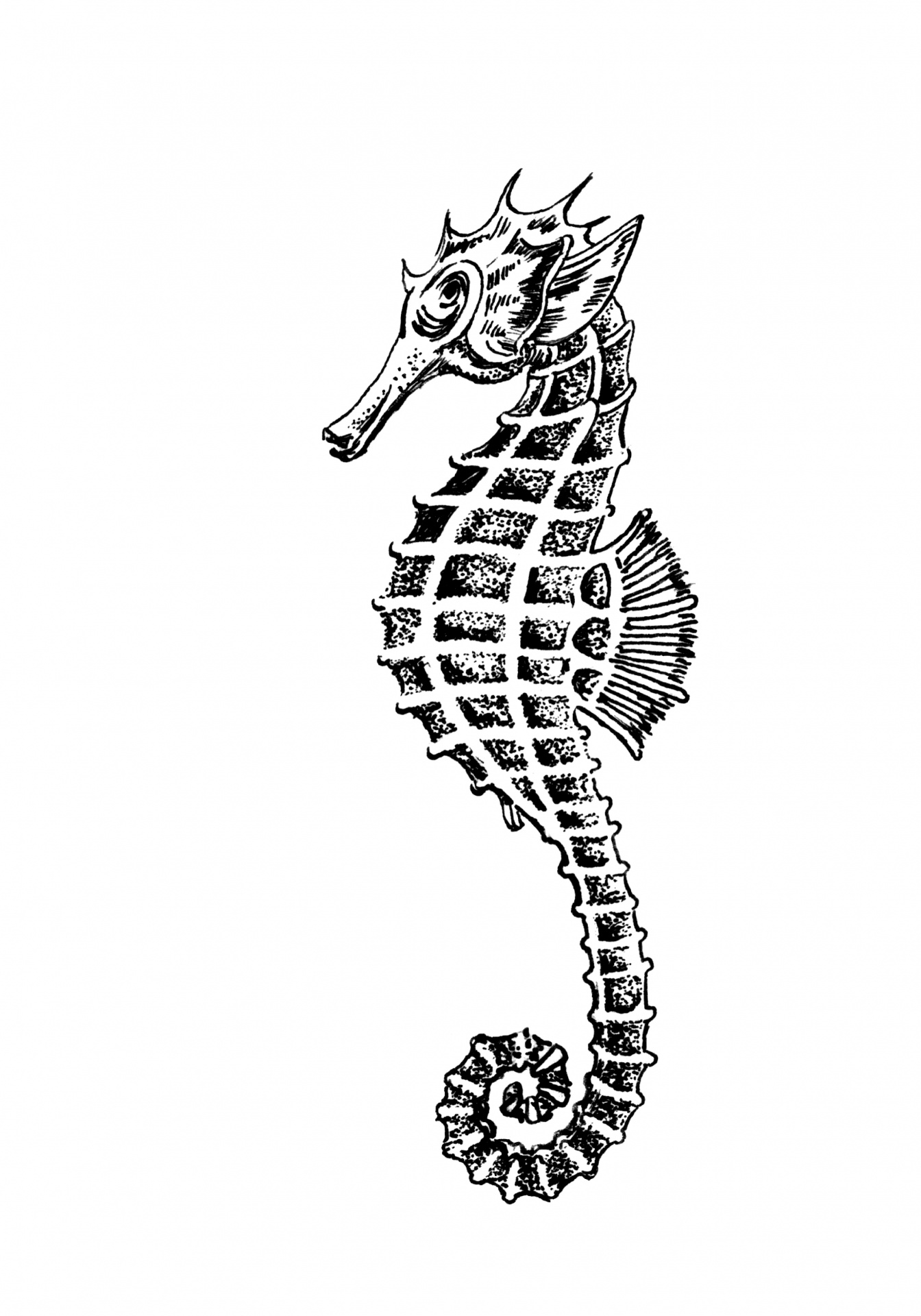 Seahorse clipart illustration free