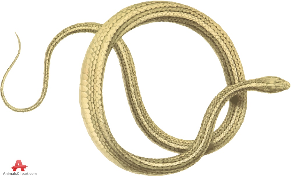 Snake clip art animals 3 clipart