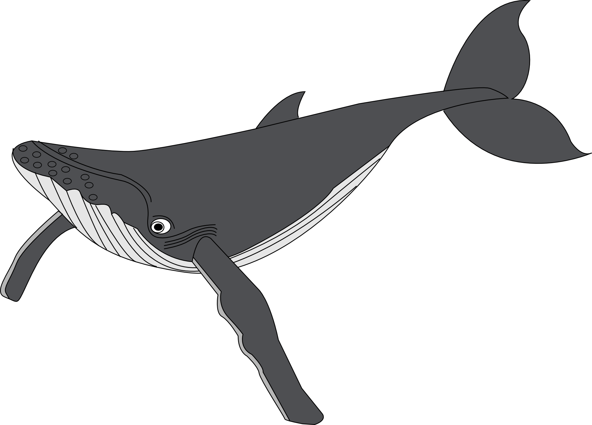 Whale  black and white killer whale clipart black and white dromgcb top 2
