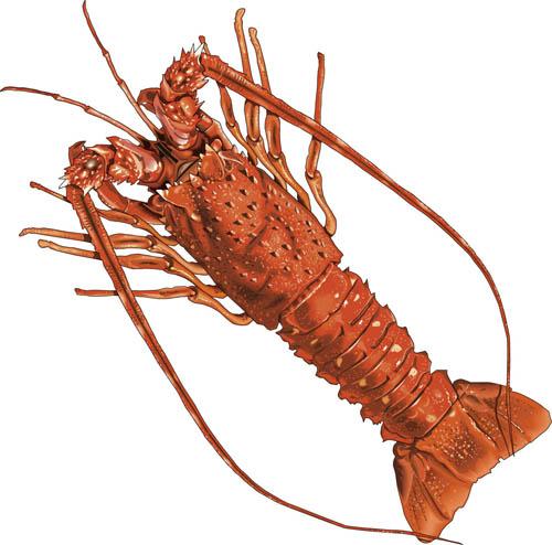 Animated lobster clip art danasoihk top