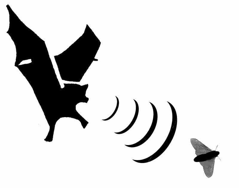 Bat clipart free images 7