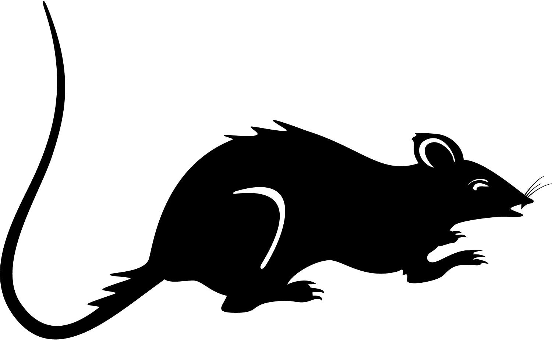 Black rat clipart