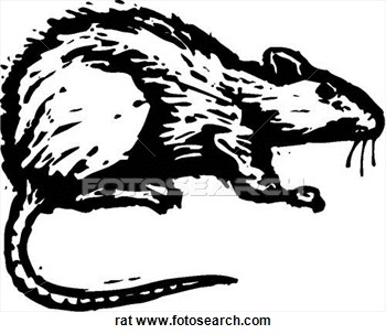 Dead rat clipart