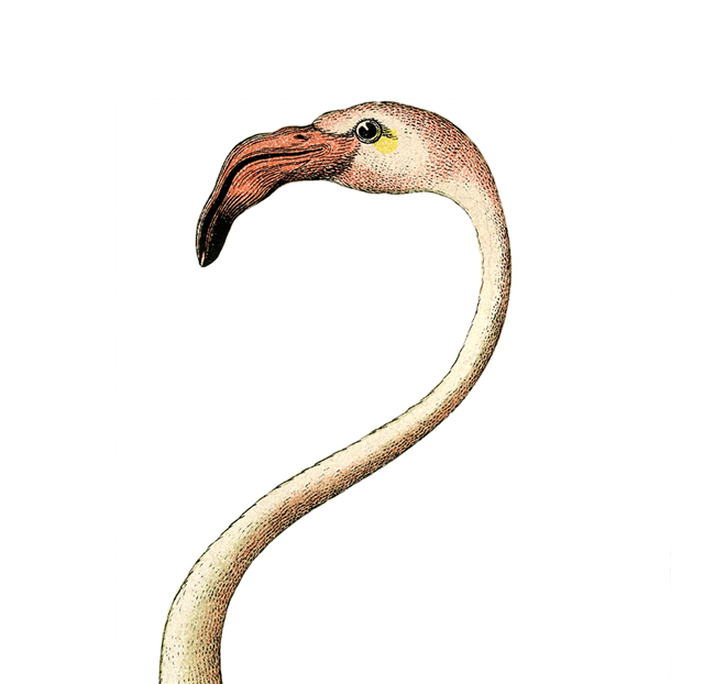 Fabulous free flamingo clip art the graphics fairy 2