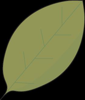 Green leaf outline clipart 2