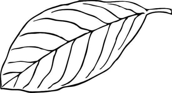 Leaf outline black and white leaf clipart