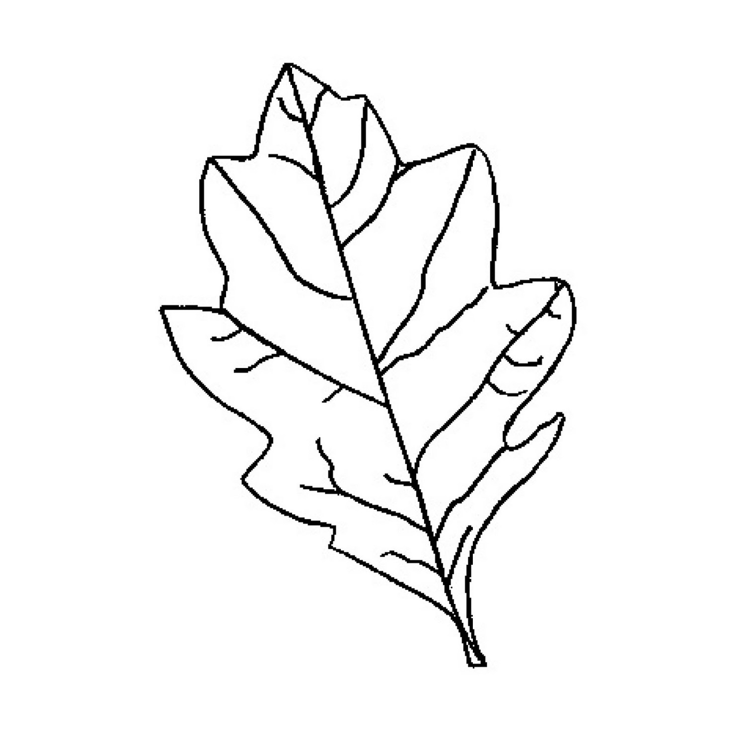 Leaf outline tree with leaves clipart 4 clipart