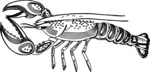Lobster clip art download