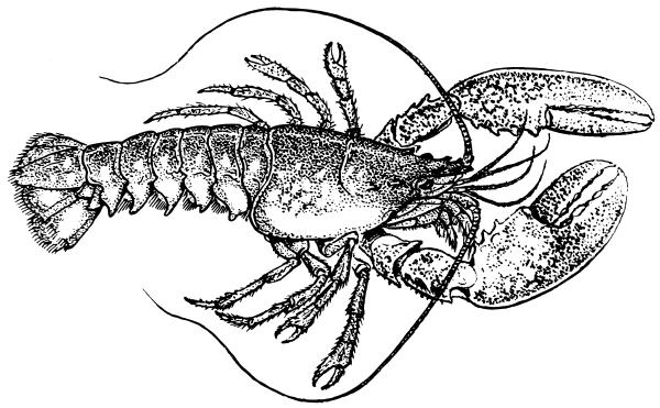 Lobster clip art free 3