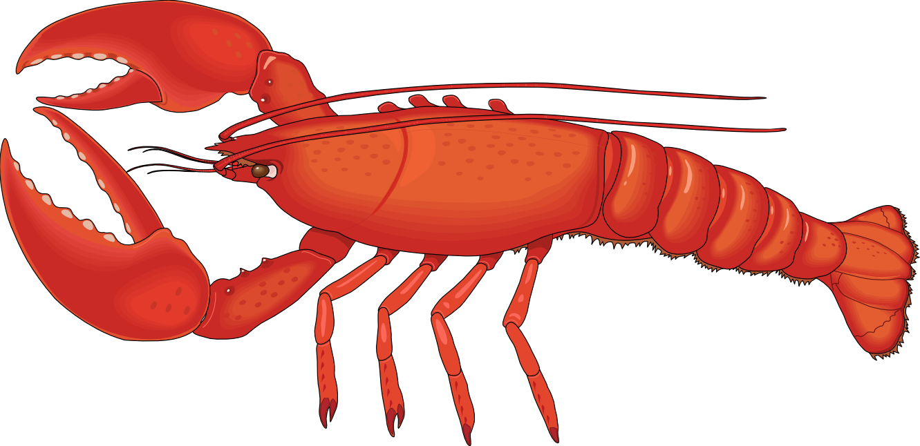 Lobster clip art free clipart images