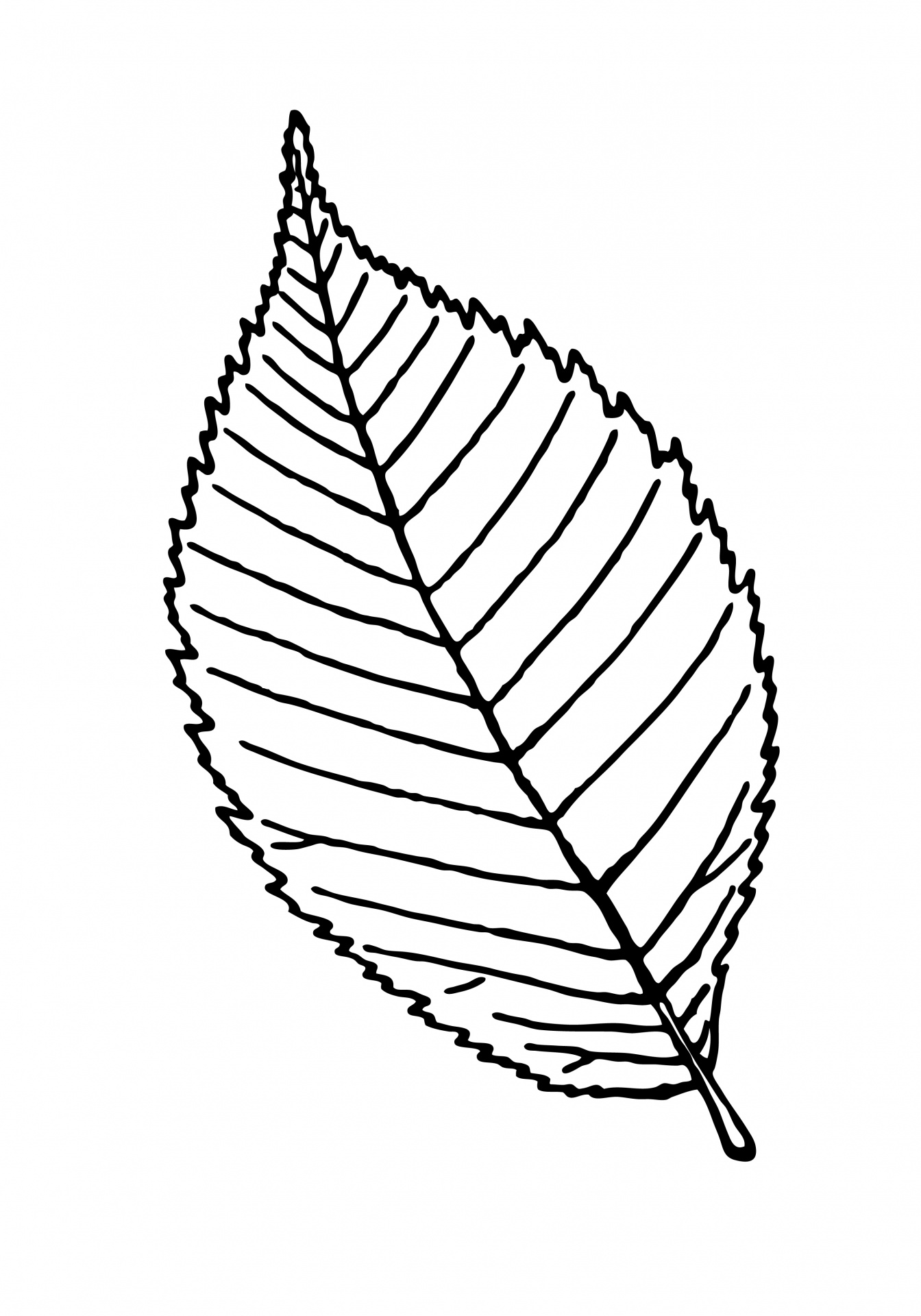 Maple leaf outline clipart 3 clipart