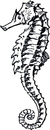 Mermaid  black and white sea creatures black and white clipart 2