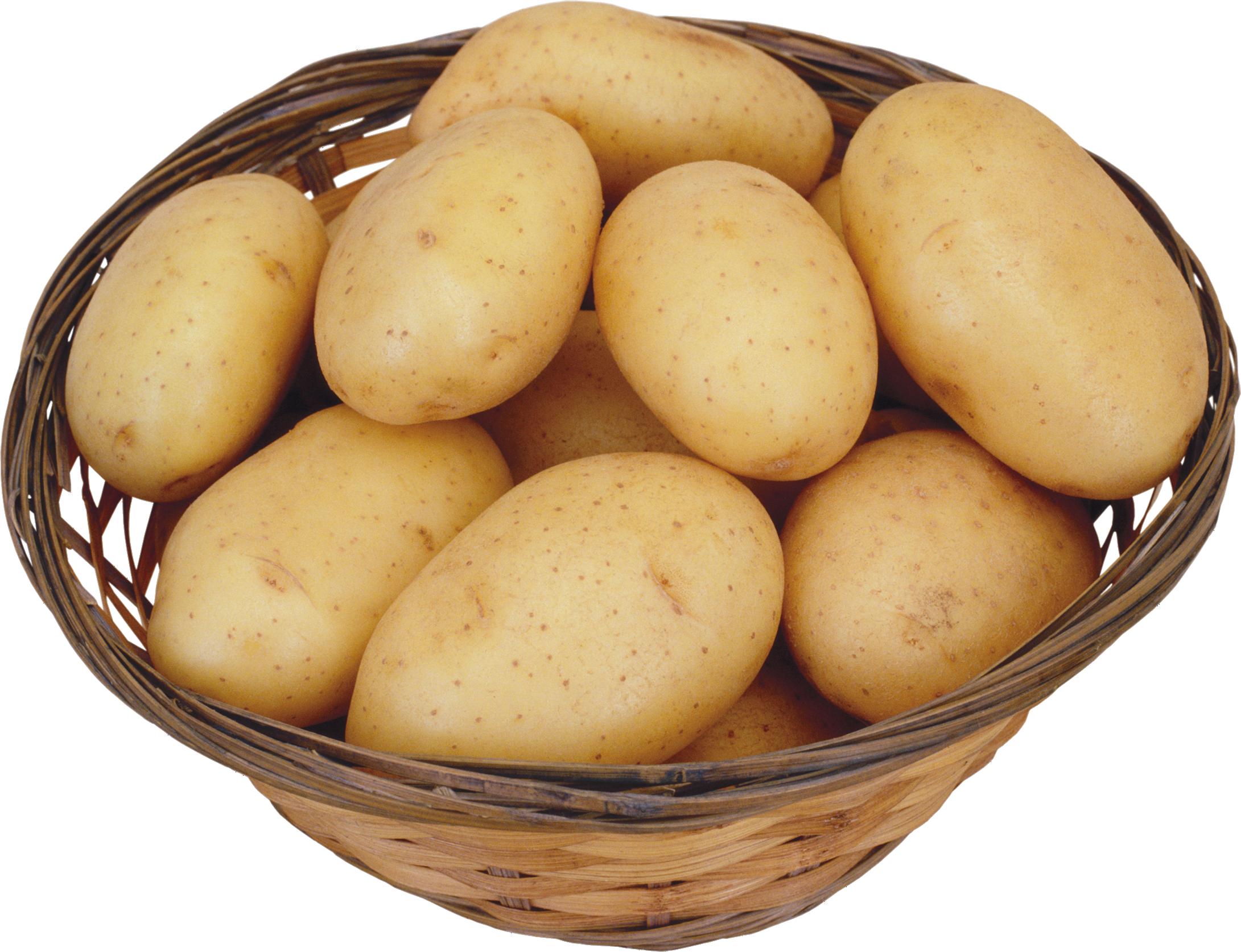 Potato clipart images 2
