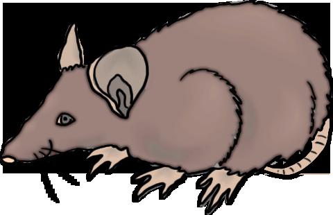 Rat clip art image tips
