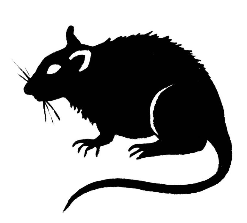 Rat clipart clipart