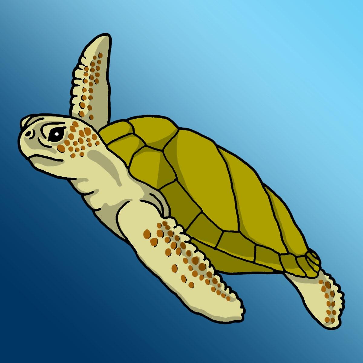 Sea turtle clip art 2