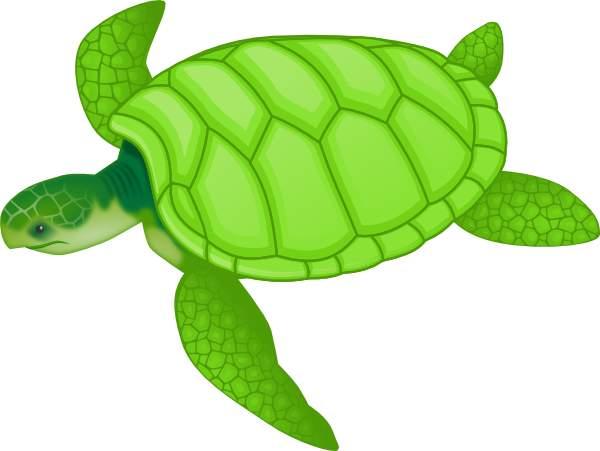 Sea turtle clipart 4