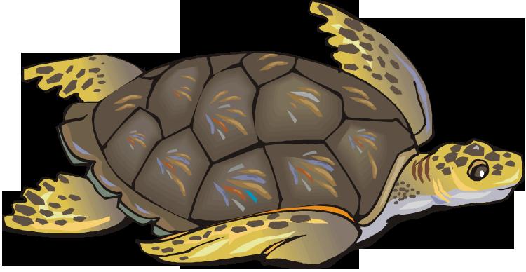 Sea turtle clipart 6
