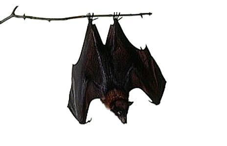 Sleeping bat clipart 3