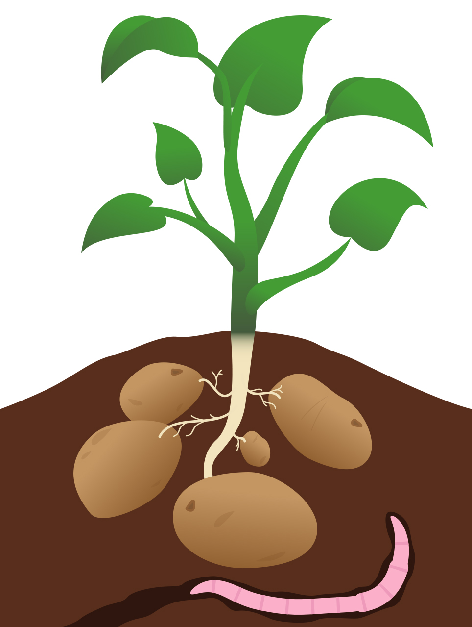 Tree of potato clipart