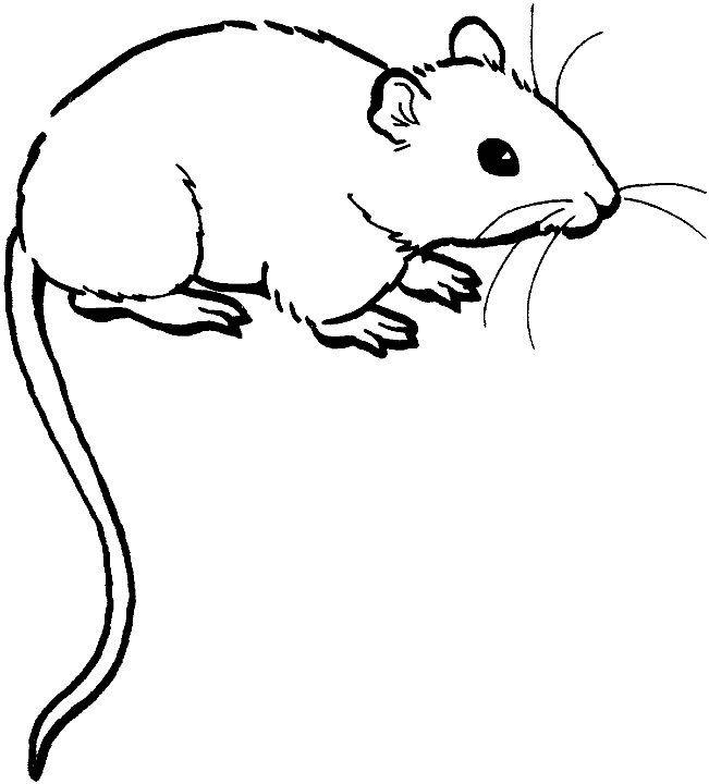 White rat clipart