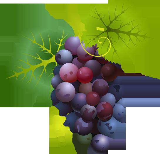 Grapes clip art download