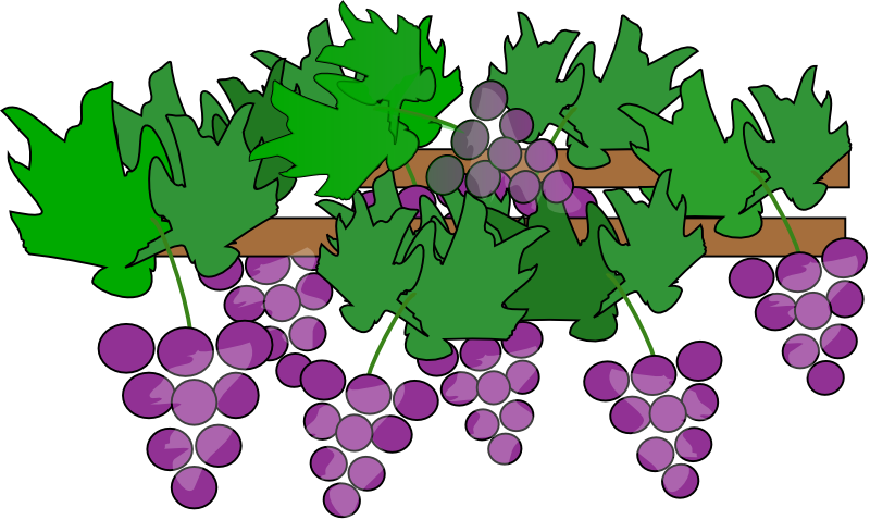 Grapes free to use clip art 2