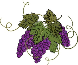 Grapes images about grape art on vineyard window clipart
